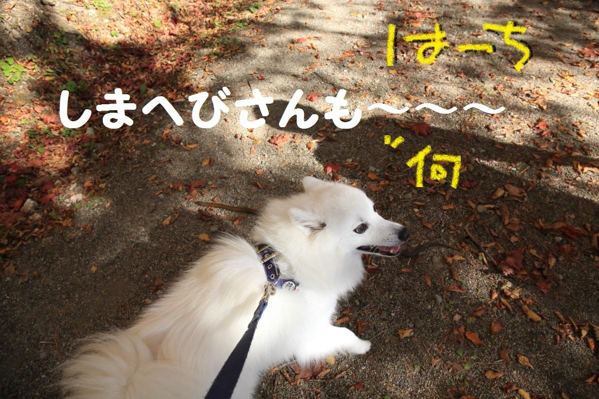 10_201511041553142d9.jpg