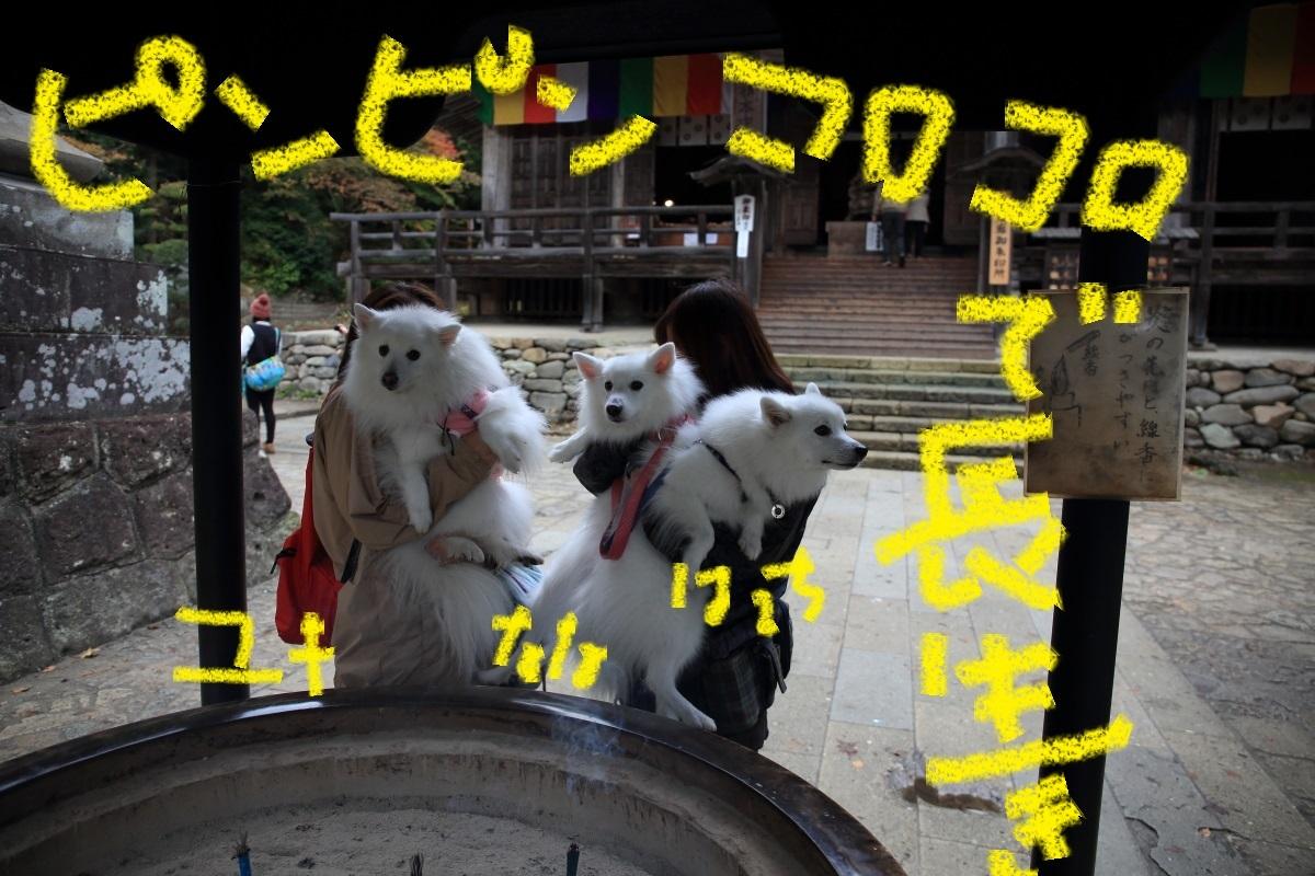 1_20151110103732fa9.jpg