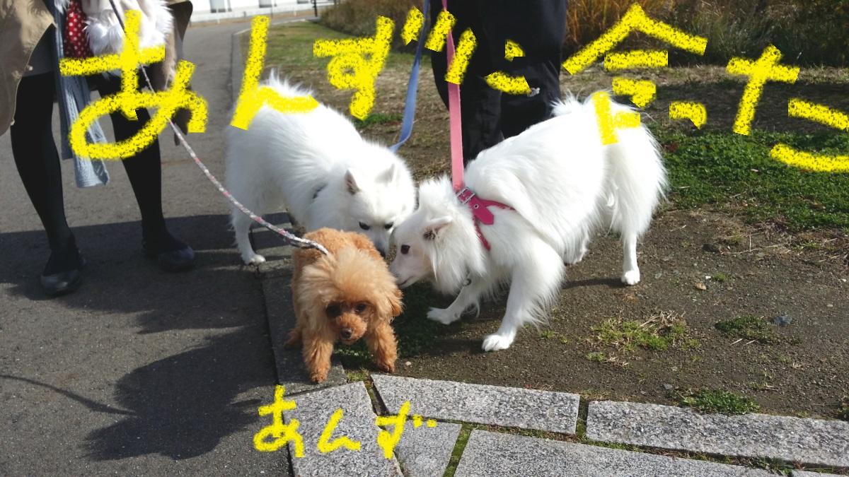20151103_121841.jpg