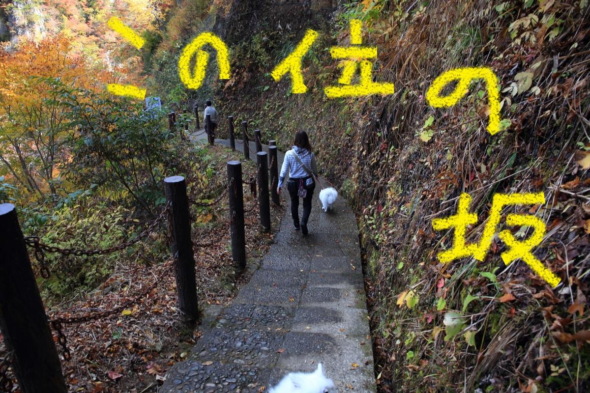 2_201511040222246ee.jpg