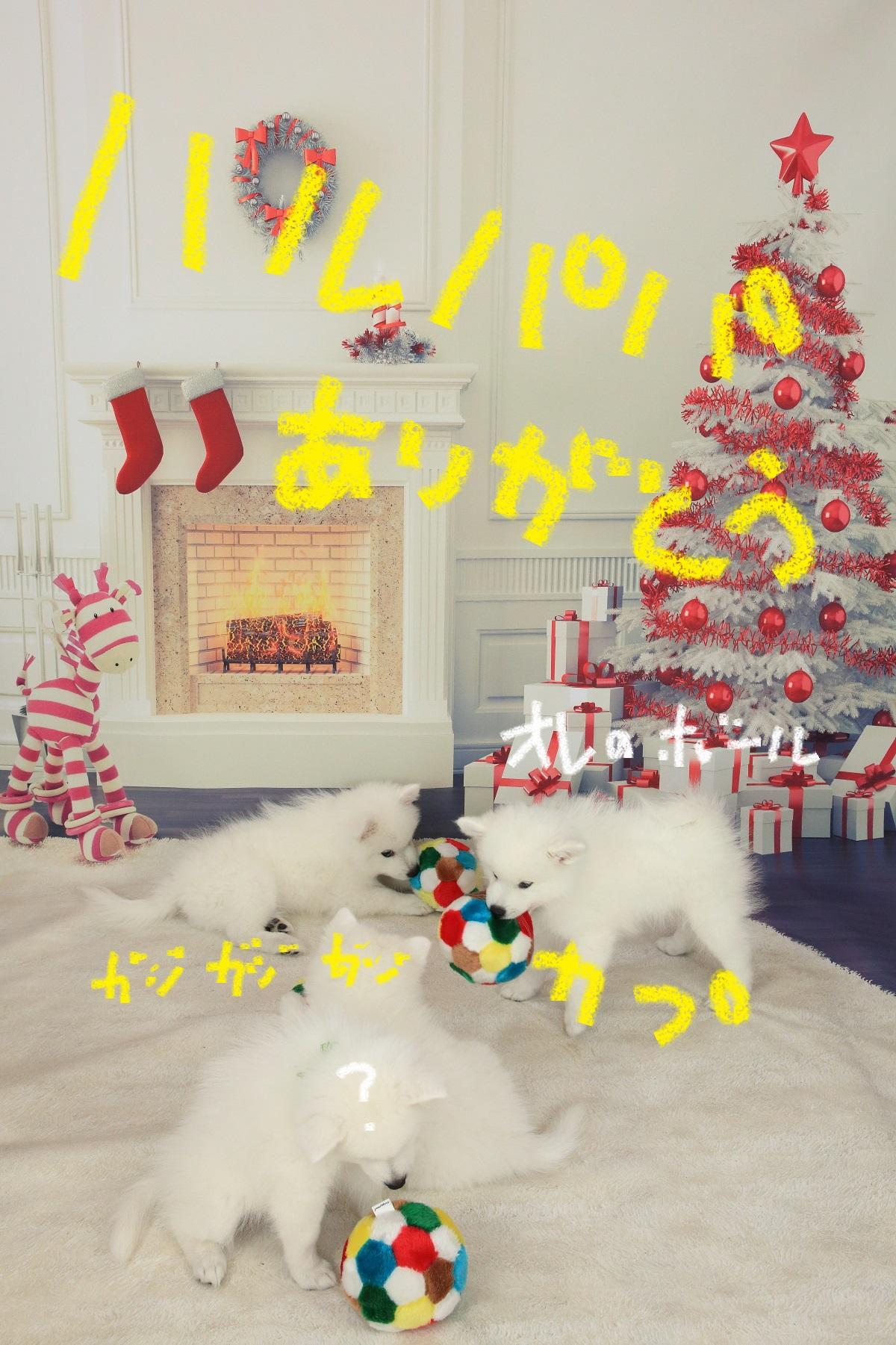 3_20151127055807045.jpg