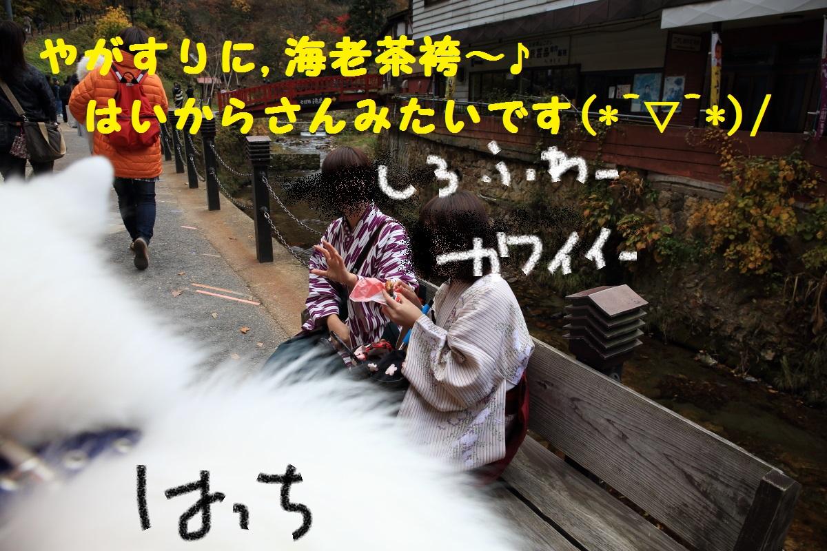4_2015111619595864d.jpg
