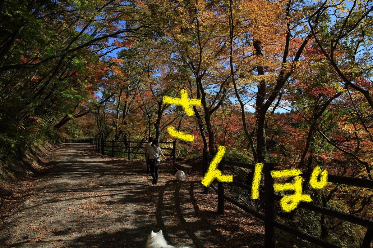 7_20151104155317f93.jpg