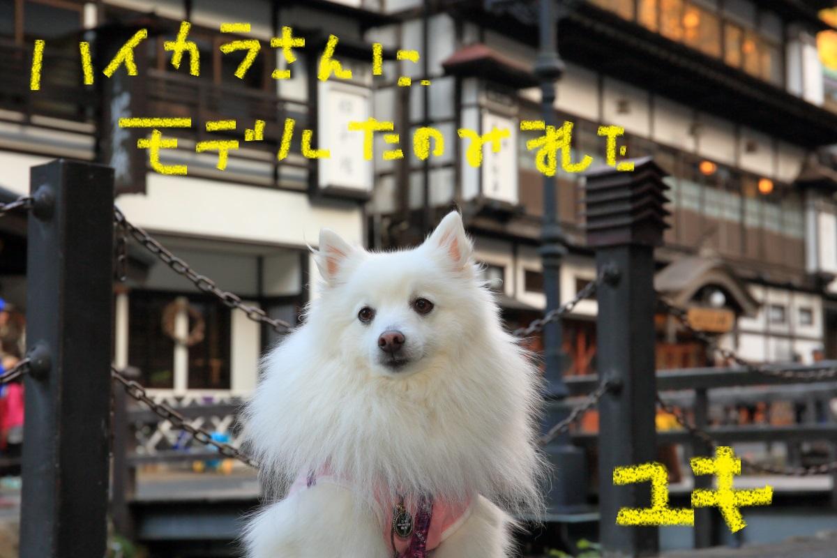 9_20151116200048cdc.jpg