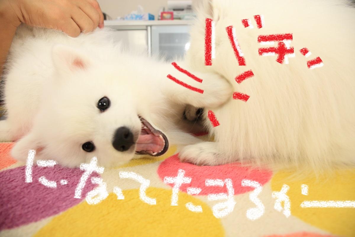 9_20151203215103bc7.jpg