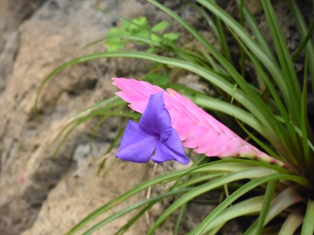 植物園・夕日の滝 006