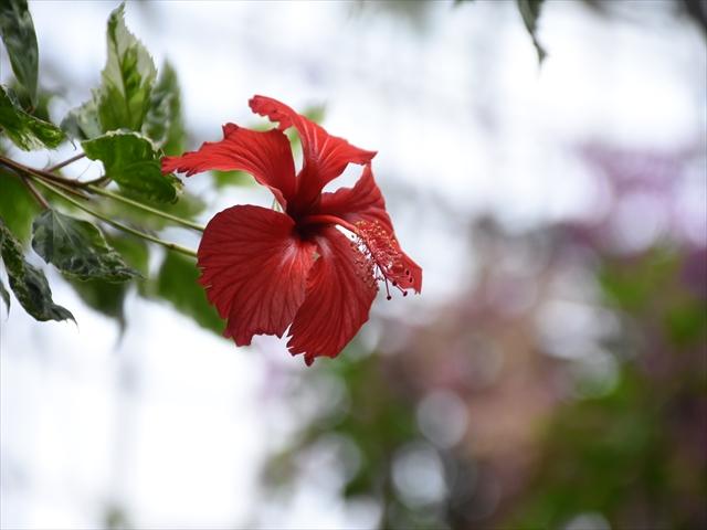 植物園・夕日の滝 040