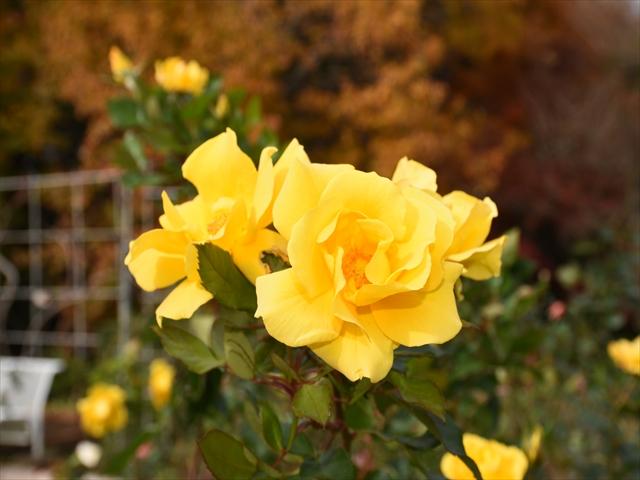 植物園・夕日の滝 075