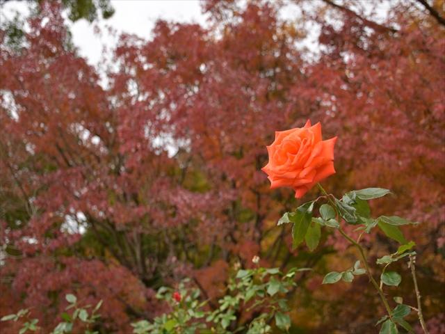 植物園・夕日の滝 081