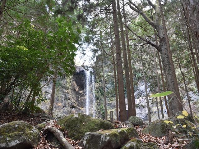 植物園・夕日の滝 117