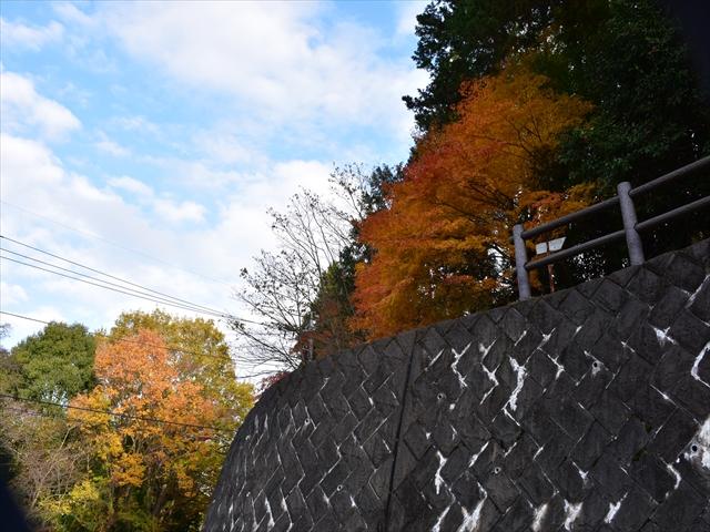 植物園・夕日の滝 147