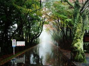 雨の足羽山 034