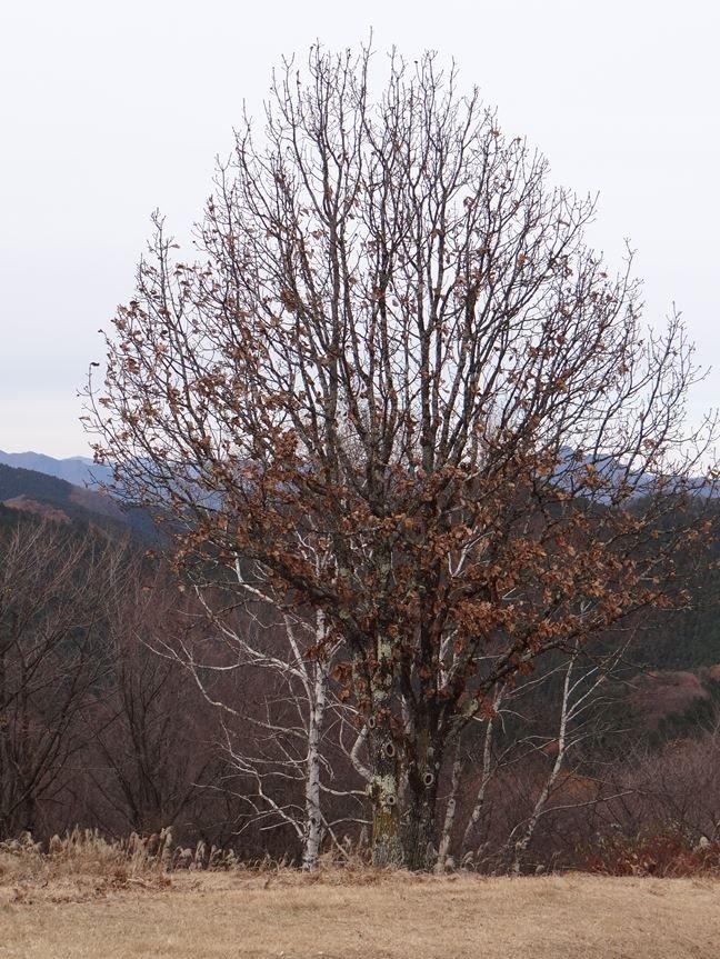 l 山頂の樹木