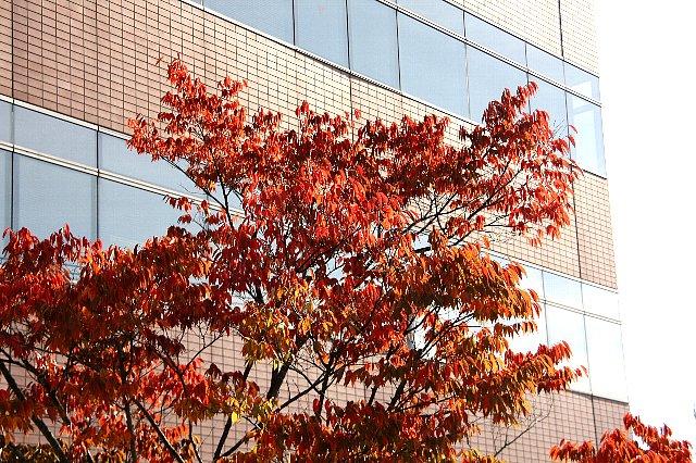 桜 紅葉2