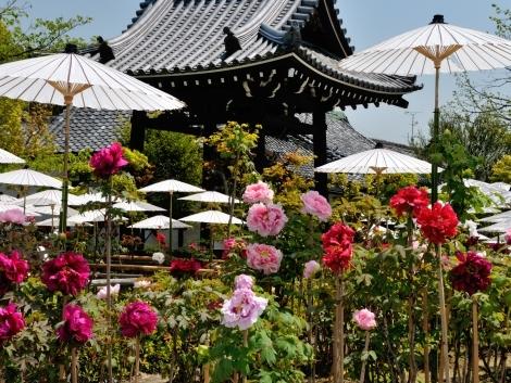 長岡京・牡丹寺(乙訓寺)