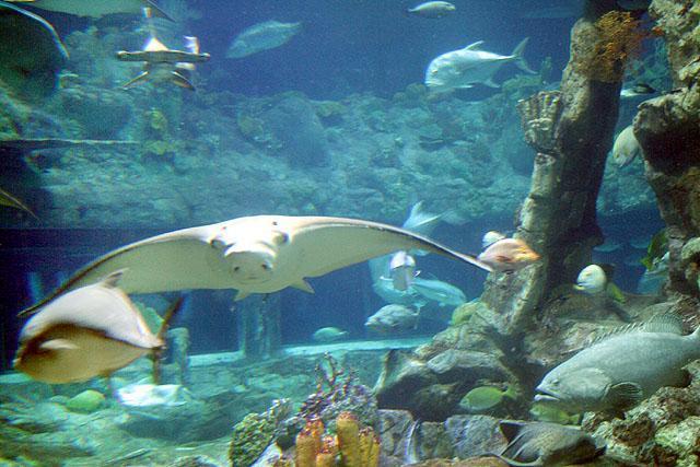アトールリーフ 海洋館