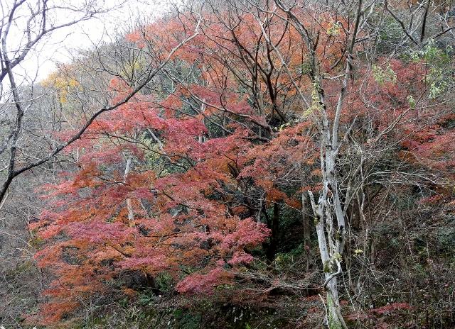 武田尾2015-12-06 078 (640x464)