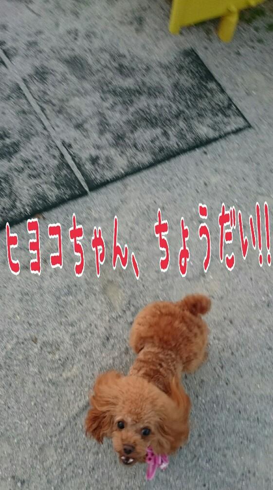 20151024161554455.jpg