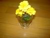 黄色い花①