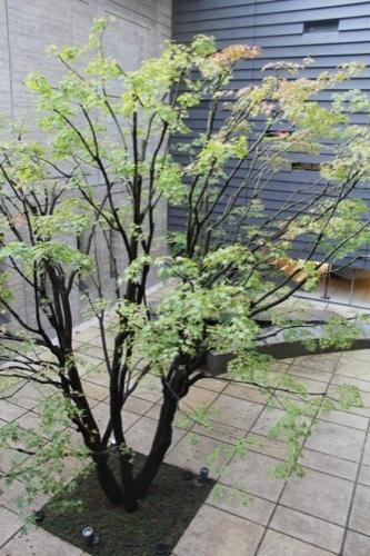 0018:龍谷ミュージアム 中庭①