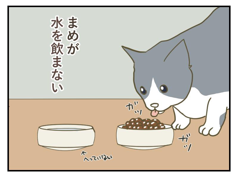 ご飯は食べるけど、水を飲まない様子の猫まめちゃん