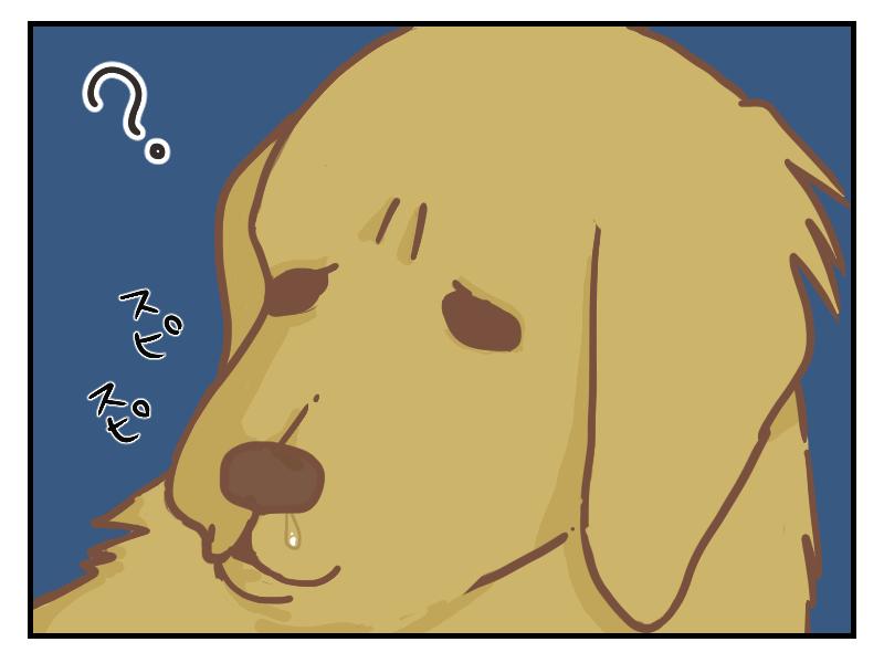 くだらない飼い主の遊びを、微妙な顔で見守る犬です