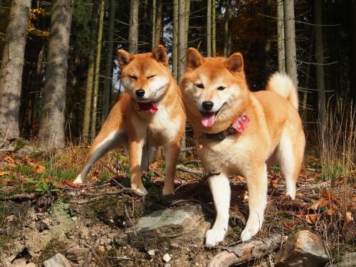 秋の山散歩14