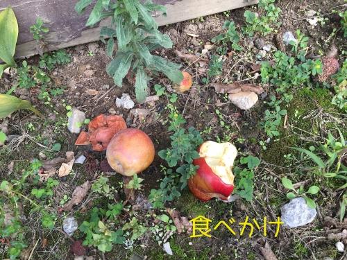 食べかけのリンゴ放置