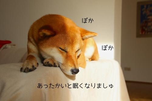 ぽかぽか眠いセナ