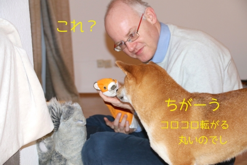 好みのうるさい犬