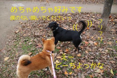 セナと挨拶する小型犬