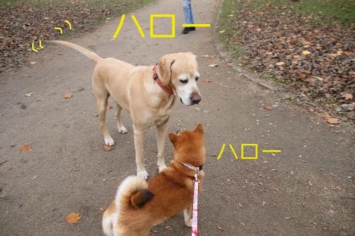 セナに挨拶する大型犬