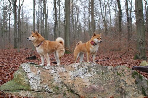 岩の上で2匹が佇む