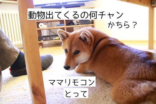 アニマルチャンネルが見たい犬