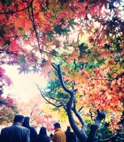 4mokijikairo2015_liteup.jpg