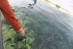 ロビナ ビーチの船の上から魚にエサをやる画像1