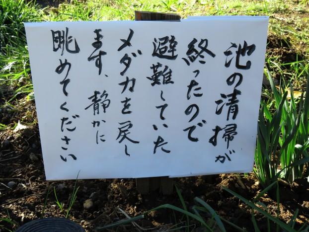 びぃなむ1130-09