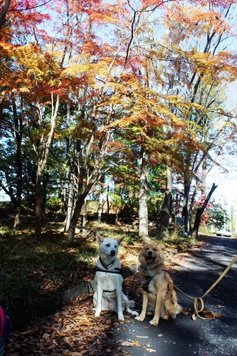 IMG_2070嵐山