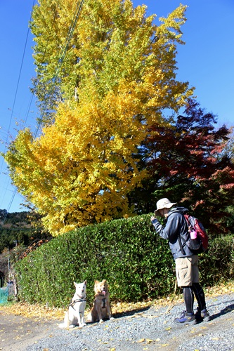 IMG_2086嵐山