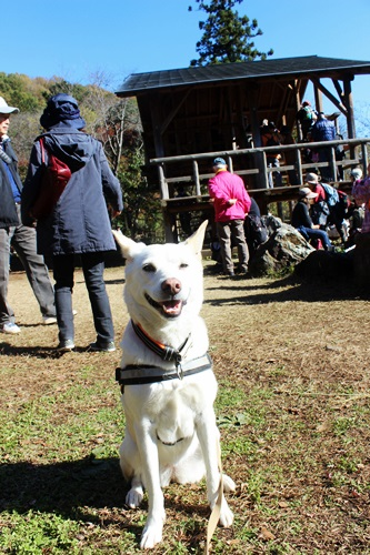 IMG_2106嵐山