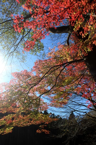 IMG_2138嵐山