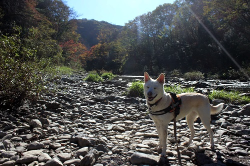 IMG_2143嵐山