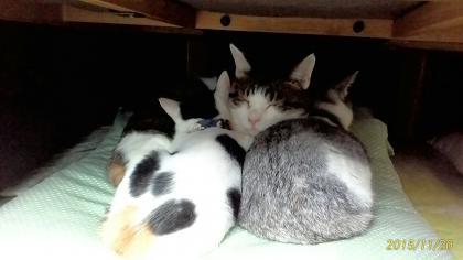 三色猫団子?
