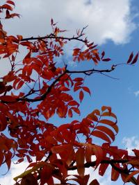 2015/10/25新発田2