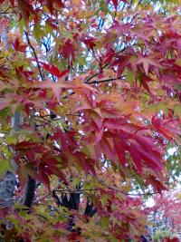 2015/10/25新発田5