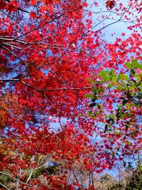 2015/11/13新津2