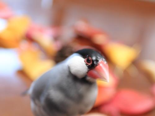 kojou kouenn 2015kouyou (6)