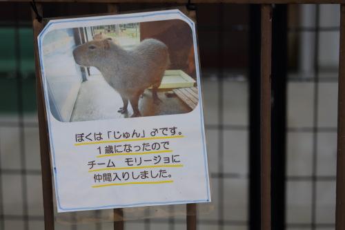 kojou kouenn pony (3)