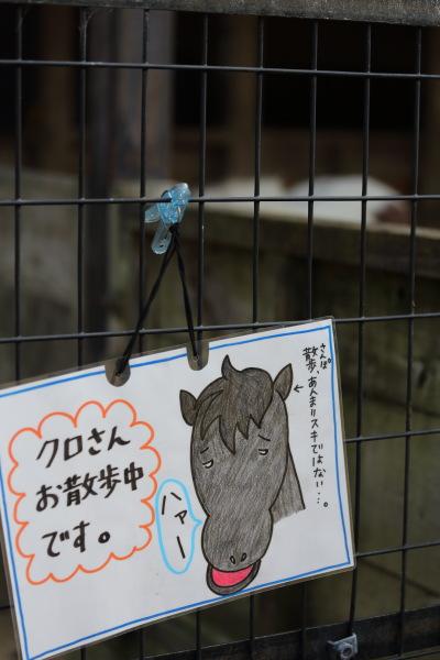 kojou kouenn pony (1)