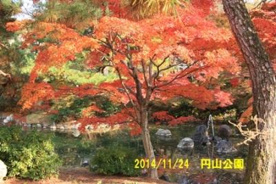 2014_11_24八坂神社